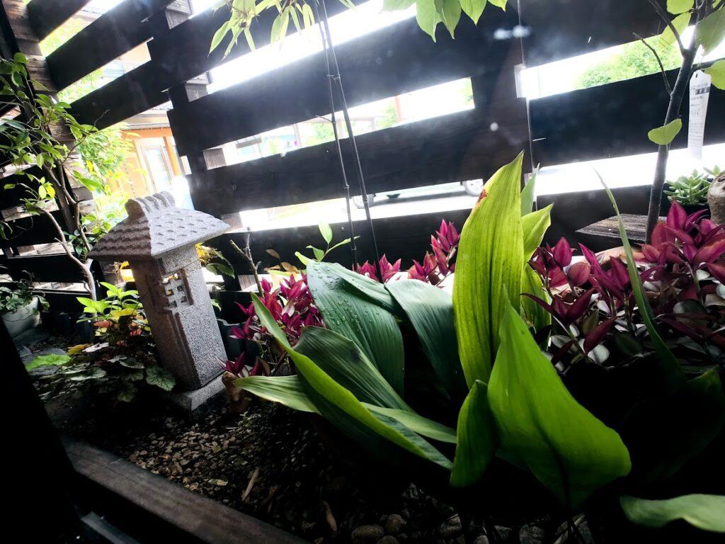 窓から見える観葉植物